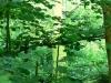 Baum mit Moos im See