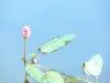 Seeblüte