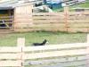 Huskycamp